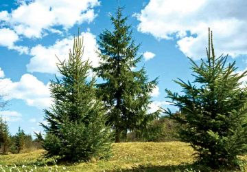 forest-ss_43474279-360x250.jpg