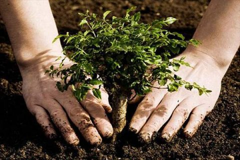 Δενδροφυτεύσεις , δέντρο