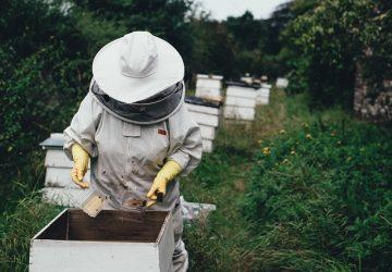 apiarybeehives-beemelissokomos-360x250.jpg