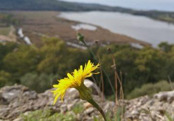 vonitsa-flower-360x250.jpg