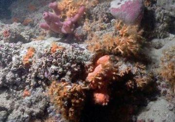 coral-reef-mediterranean-360x250.jpg